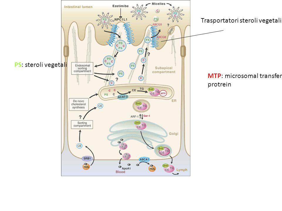 PS: steroli vegetali MTP: microsomal transfer protrein Trasportatori steroli vegetali