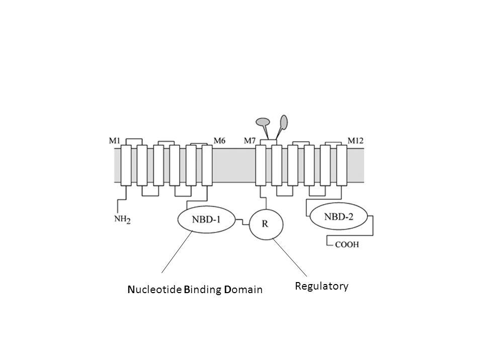 Nucleotide Binding Domain Regulatory