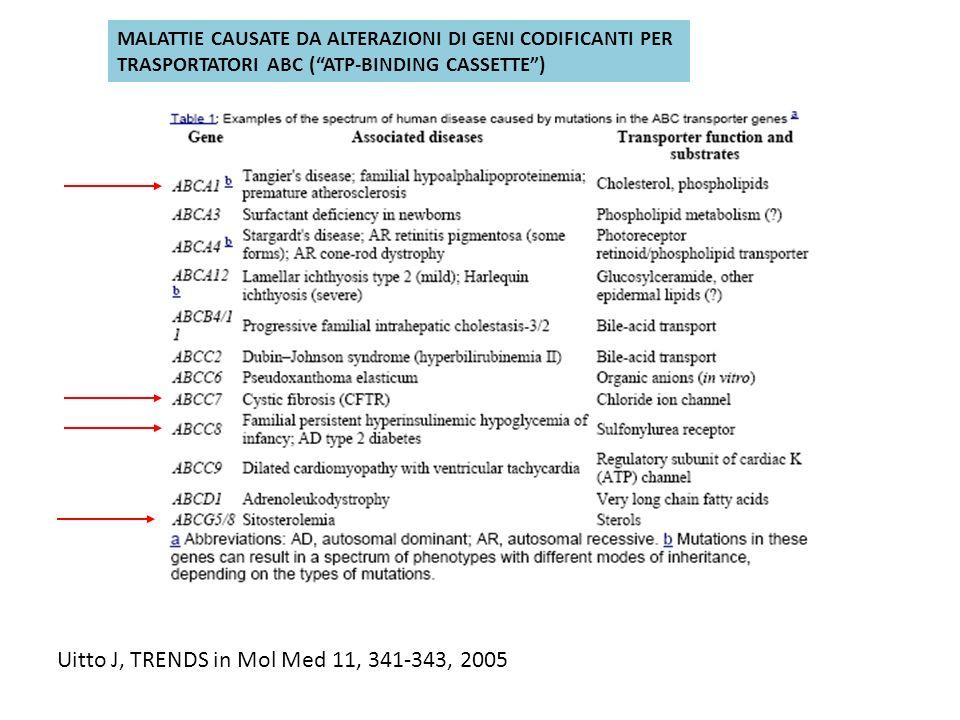 Uitto J, TRENDS in Mol Med 11, 341-343, 2005 MALATTIE CAUSATE DA ALTERAZIONI DI GENI CODIFICANTI PER TRASPORTATORI ABC (ATP-BINDING CASSETTE)