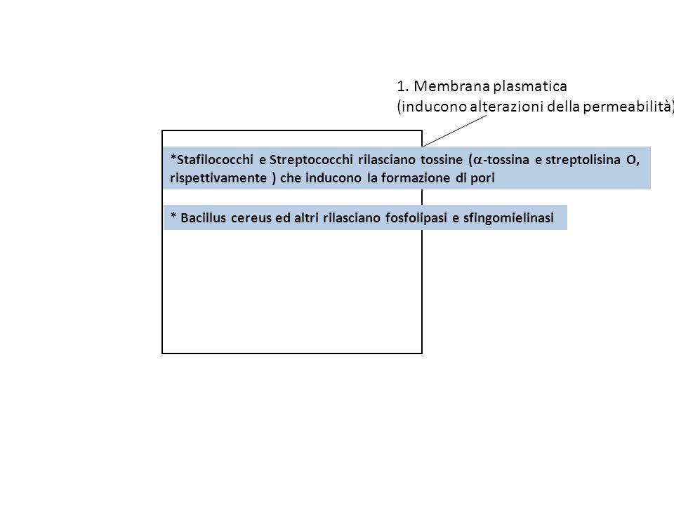 1. Membrana plasmatica (inducono alterazioni della permeabilità) *Stafilococchi e Streptococchi rilasciano tossine ( -tossina e streptolisina O, rispe
