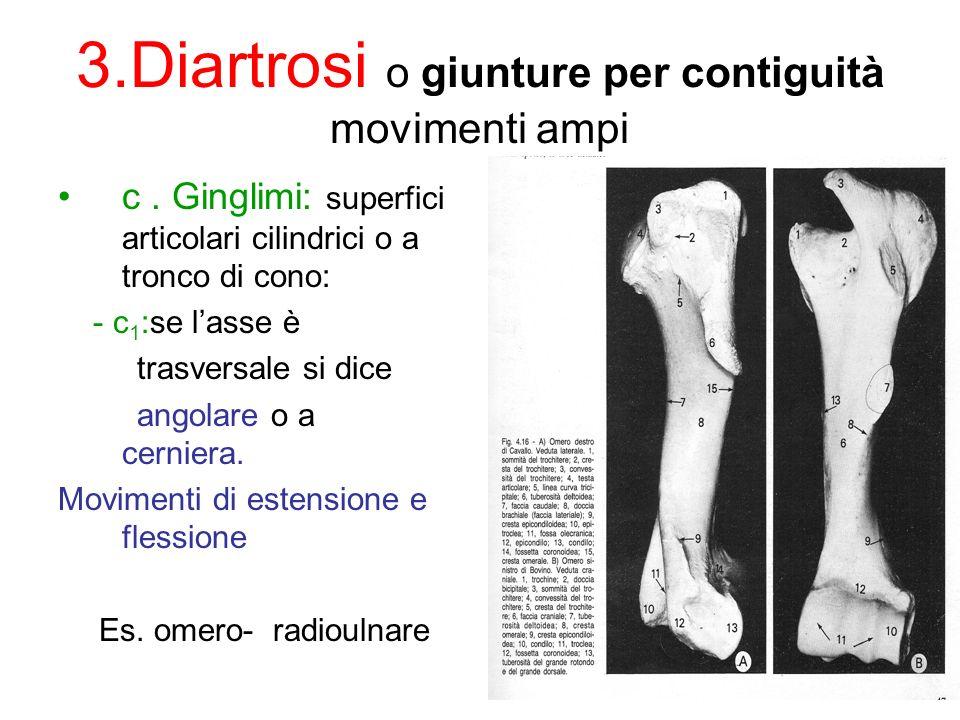 3.Diartrosi o giunture per contiguità movimenti ampi c.
