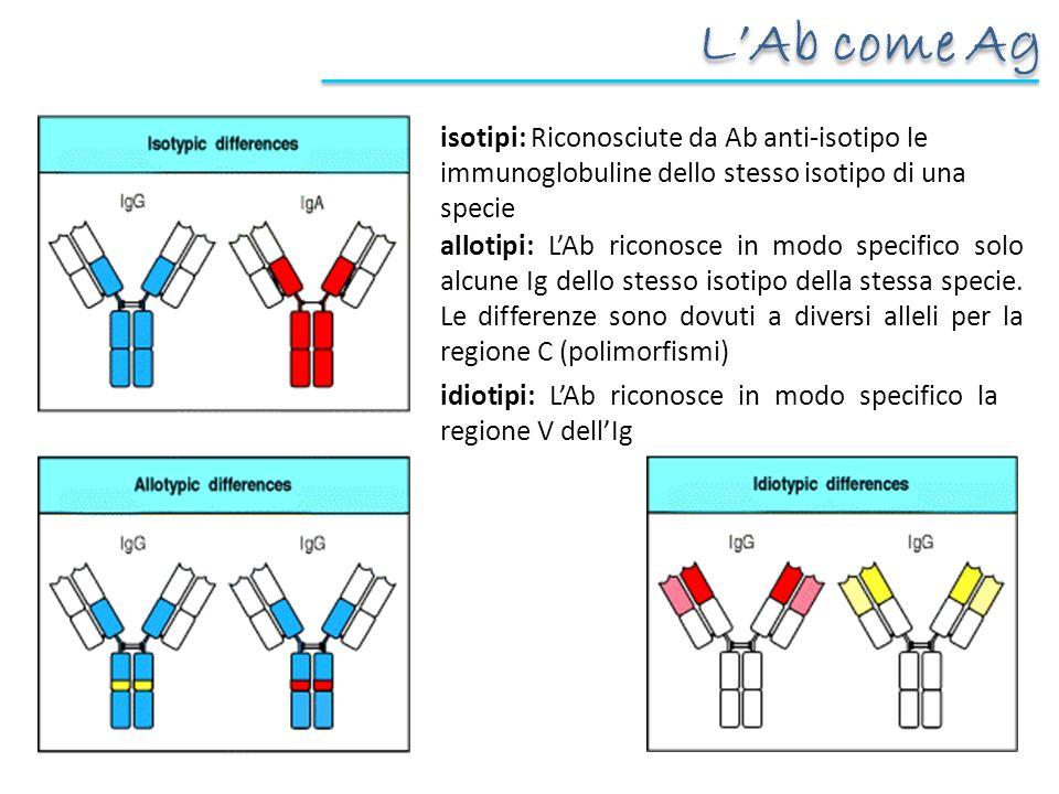isotipi: Riconosciute da Ab anti-isotipo le immunoglobuline dello stesso isotipo di una specie allotipi: LAb riconosce in modo specifico solo alcune Ig dello stesso isotipo della stessa specie.