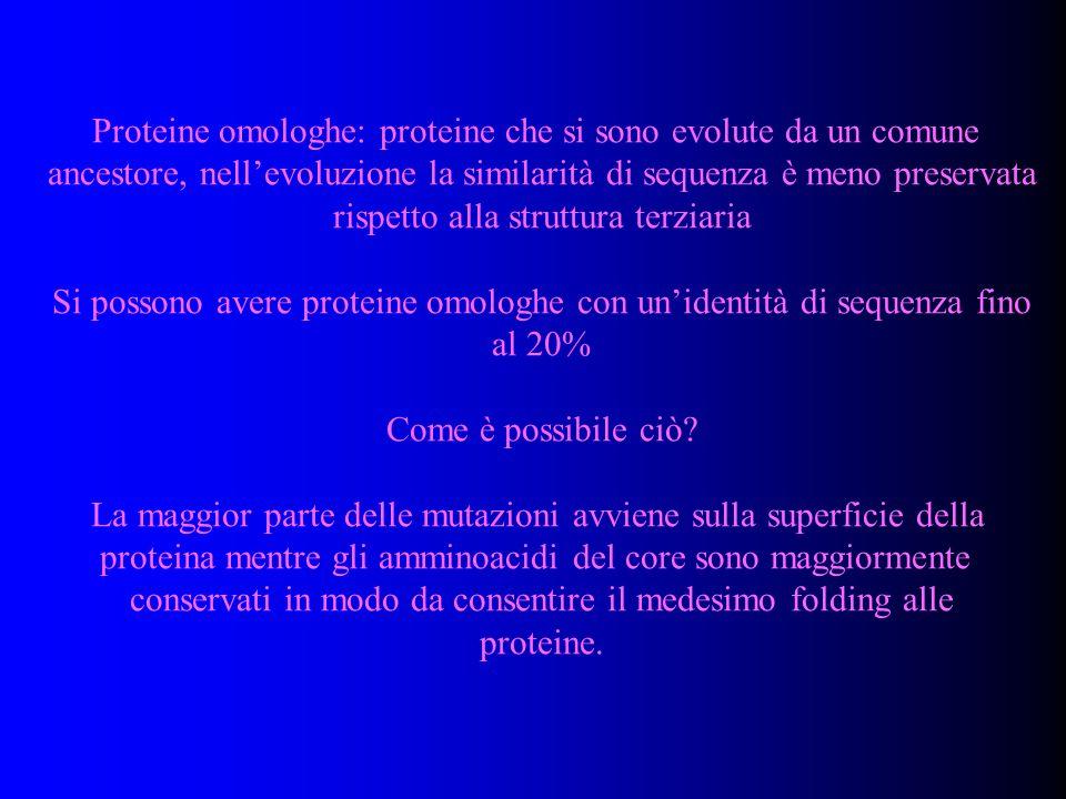 Proteine omologhe: proteine che si sono evolute da un comune ancestore, nellevoluzione la similarità di sequenza è meno preservata rispetto alla strut