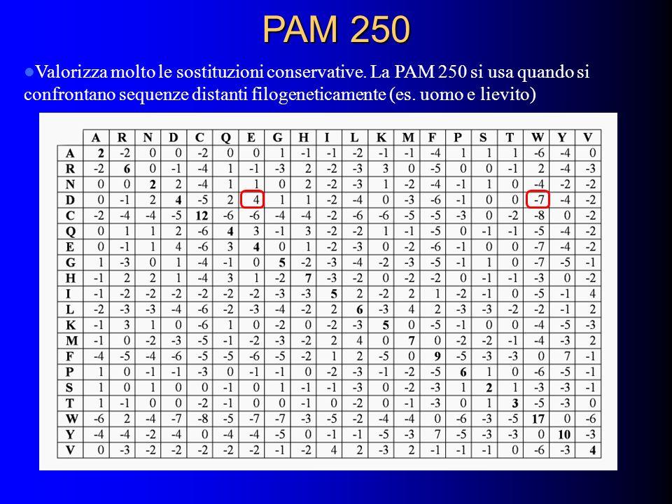 PAM 250 Valorizza molto le sostituzioni conservative. La PAM 250 si usa quando si confrontano sequenze distanti filogeneticamente (es. uomo e lievito)