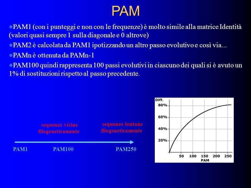 PAM PAM1 (con i punteggi e non con le frequenze) è molto simile alla matrice Identità (valori quasi sempre 1 sulla diagonale e 0 altrove) PAM2 è calco