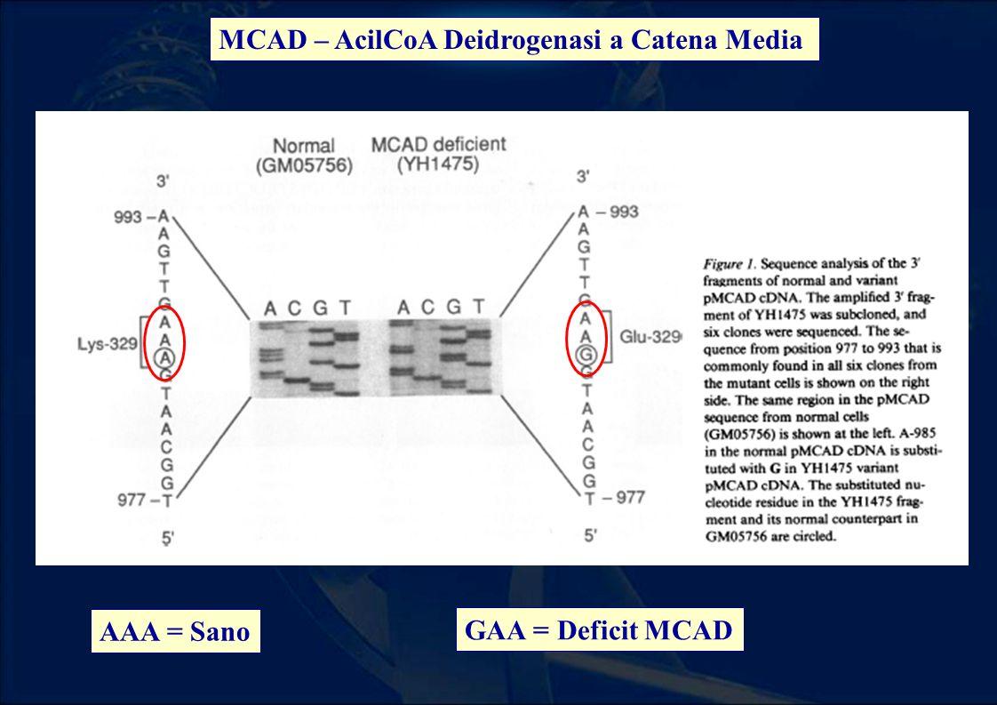 MCAD – AcilCoA Deidrogenasi a Catena Media AAA = Sano GAA = Deficit MCAD