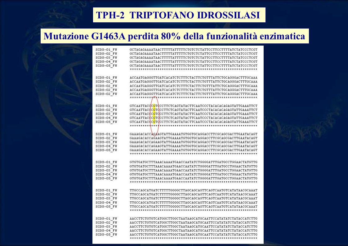 TPH-2 TRIPTOFANO IDROSSILASI Mutazione G1463A perdita 80% della funzionalità enzimatica
