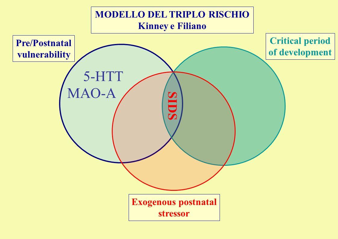 MODELLO DEL TRIPLO RISCHIO Kinney e Filiano Pre/Postnatal vulnerability Critical period of development Exogenous postnatal stressor 5-HTT SIDS MAO-A