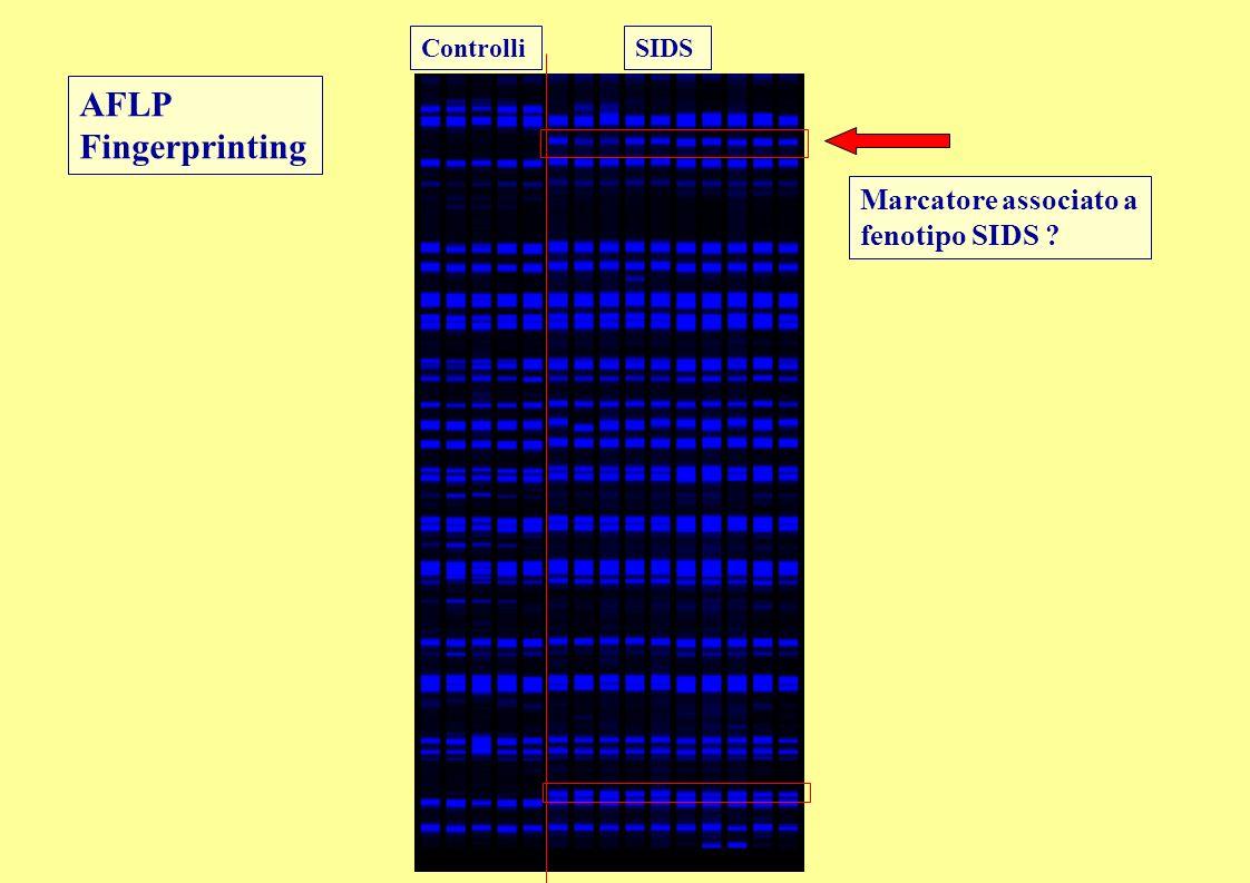 AFLP Fingerprinting Marcatore associato a fenotipo SIDS ? SIDSControlli