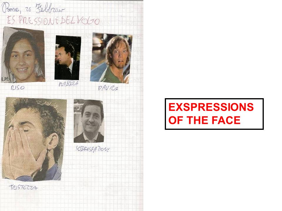 EXSPRESSIONS OF THE FACE