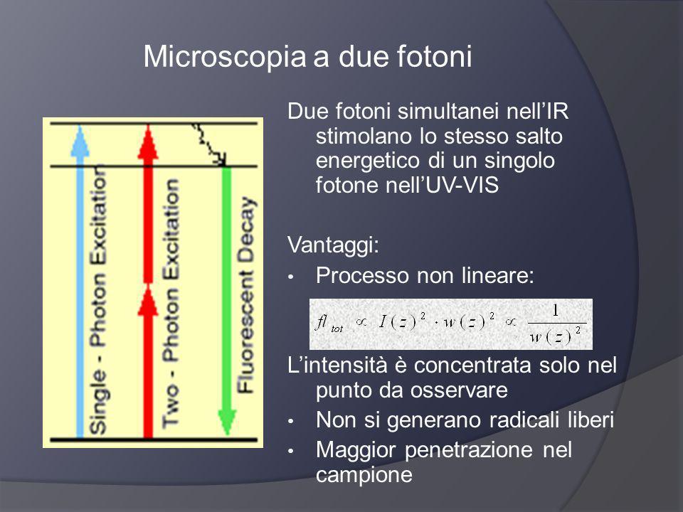 Microscopia a due fotoni Due fotoni simultanei nellIR stimolano lo stesso salto energetico di un singolo fotone nellUV-VIS Vantaggi: Processo non line