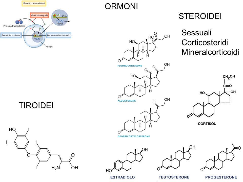 Recettori eptaeliche e Proteine G I recettori eptaelica sono sempre associati a proteine G e possono attivare o Inibire gli enzimi amplificatori: Adenilato Ciclasi o Fosfolipasi C