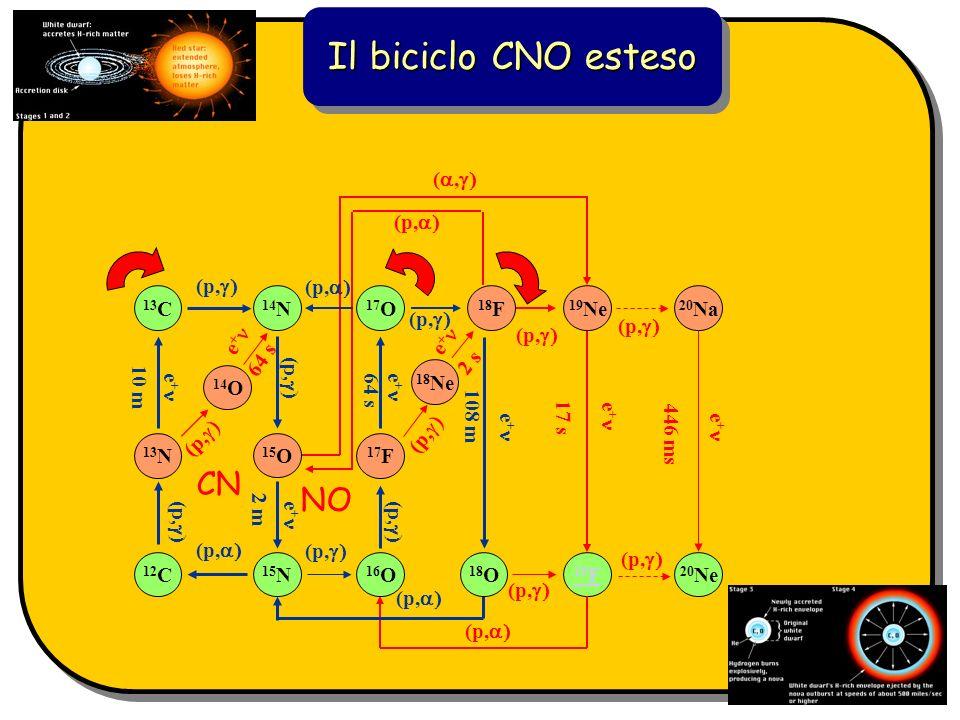 Il biciclo CNO esteso CN NO e + 19 F (p, 17 s (p, 20 Ne 20 Na (p, e + 446 ms (, 19 Ne (p, 12 C 16 O 14 N 15 N 15 O (p, e + 2 m (p, 13 N (p, 17 F (p, 1