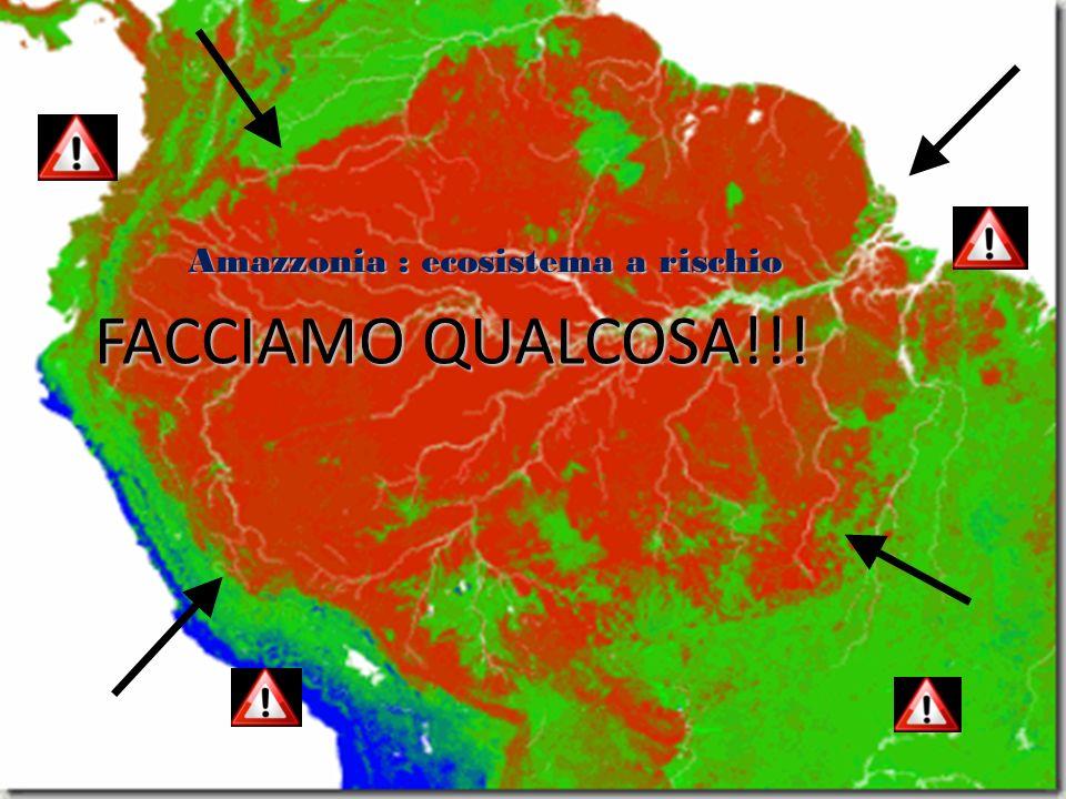 FACCIAMO QUALCOSA!!! Amazzonia : ecosistema a rischio