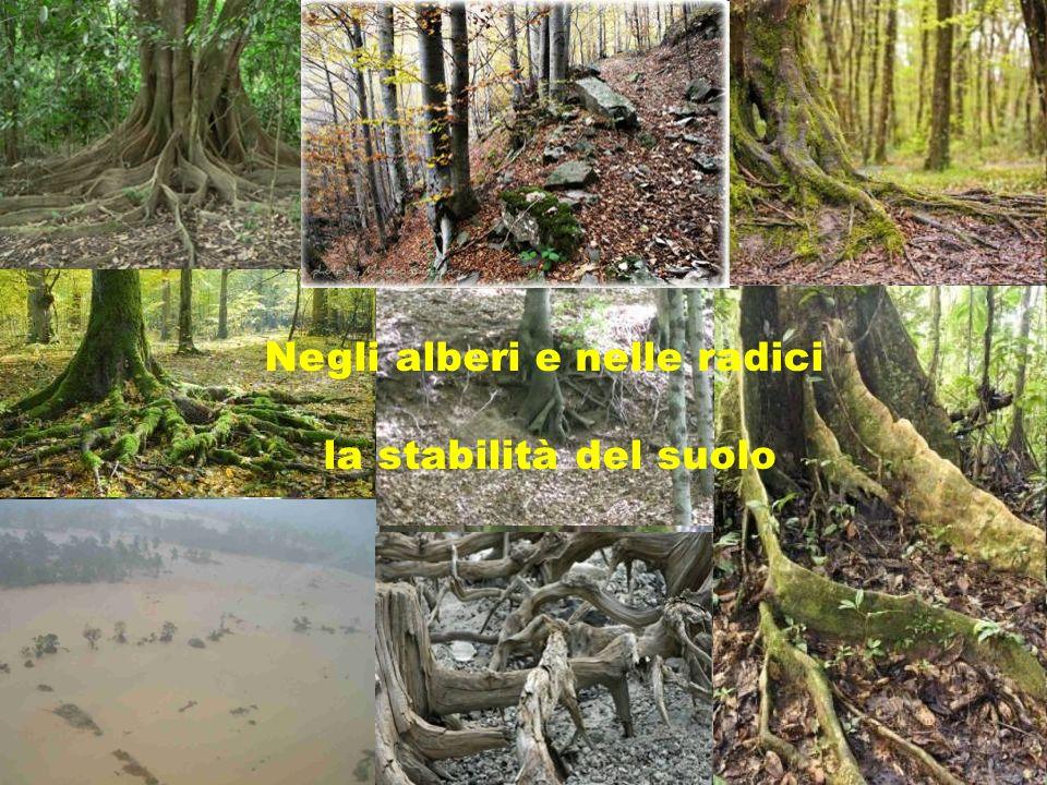 Negli alberi e nelle radici la stabilità del suolo