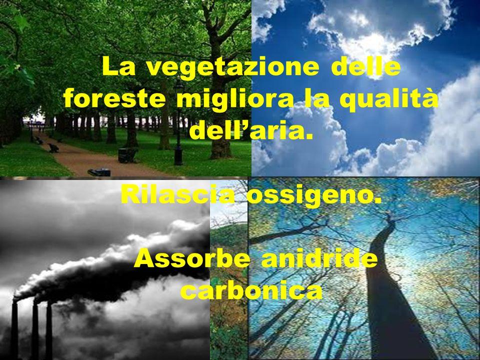 La vegetazione delle foreste migliora la qualità dellaria. Rilascia ossigeno. Assorbe anidride carbonica