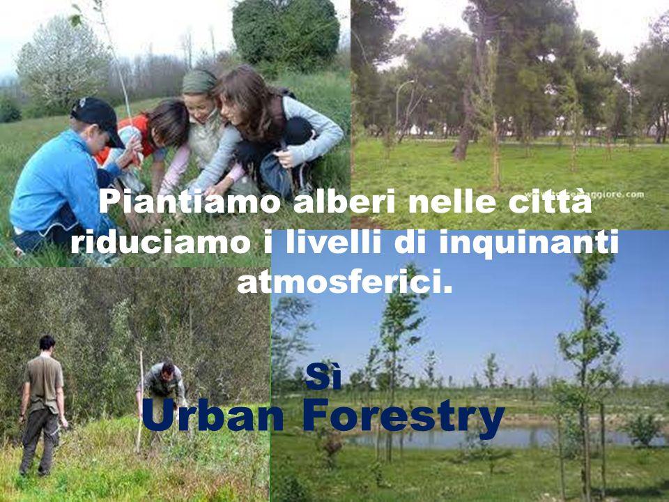Piantiamo alberi nelle città riduciamo i livelli di inquinanti atmosferici. Urban Forestry Sì