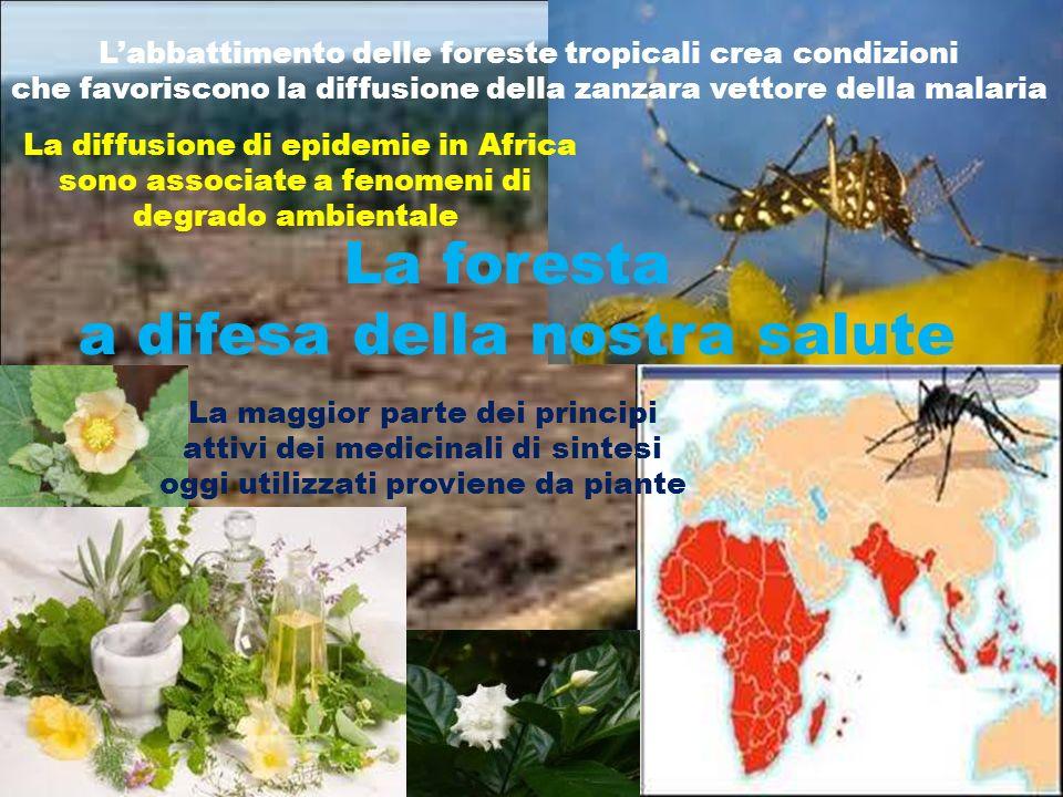 La maggior parte dei principi attivi dei medicinali di sintesi oggi utilizzati proviene da piante Labbattimento delle foreste tropicali crea condizion