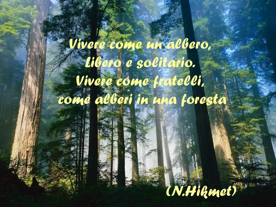 Vivere come un albero, Libero e solitario. Vivere come fratelli, come alberi in una foresta (N.Hikmet)