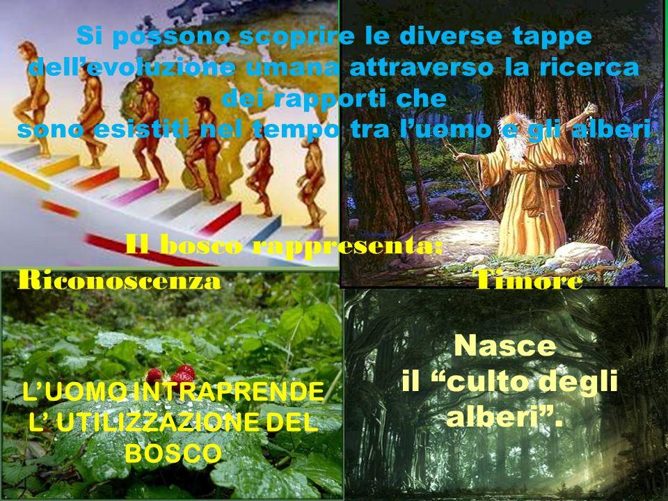 Nasce il culto degli alberi. LUOMO INTRAPRENDE L UTILIZZAZIONE DEL BOSCO Si possono scoprire le diverse tappe dellevoluzione umana attraverso la ricer