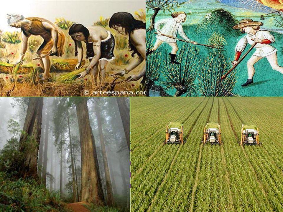 Le foreste non sono lultima riserva di terre fertili! Le foreste non sono un lusso!