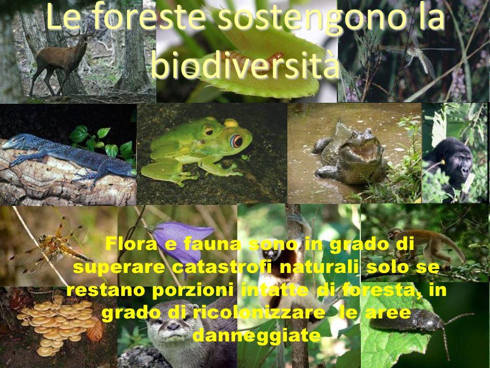 Le foreste sostengono la biodiversità Flora e fauna sono in grado di superare catastrofi naturali solo se restano porzioni intatte di foresta, in grad