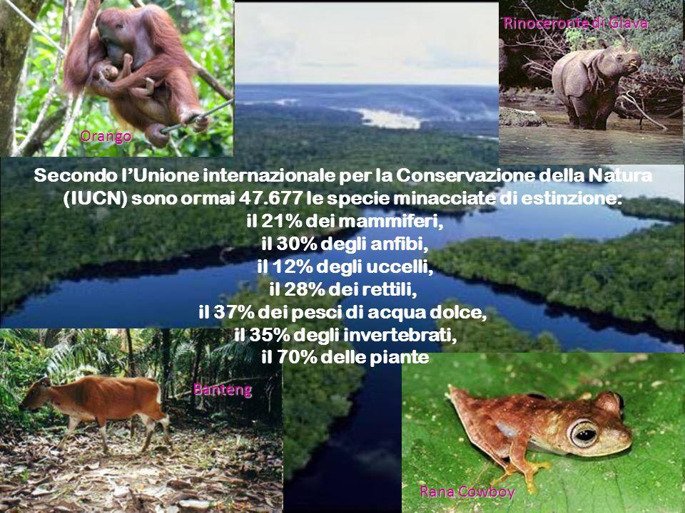 Orango Banteng Rana Cowboy Rinoceronte di Giava Secondo lUnione internazionale per la Conservazione della Natura (IUCN) sono ormai 47.677 le specie mi