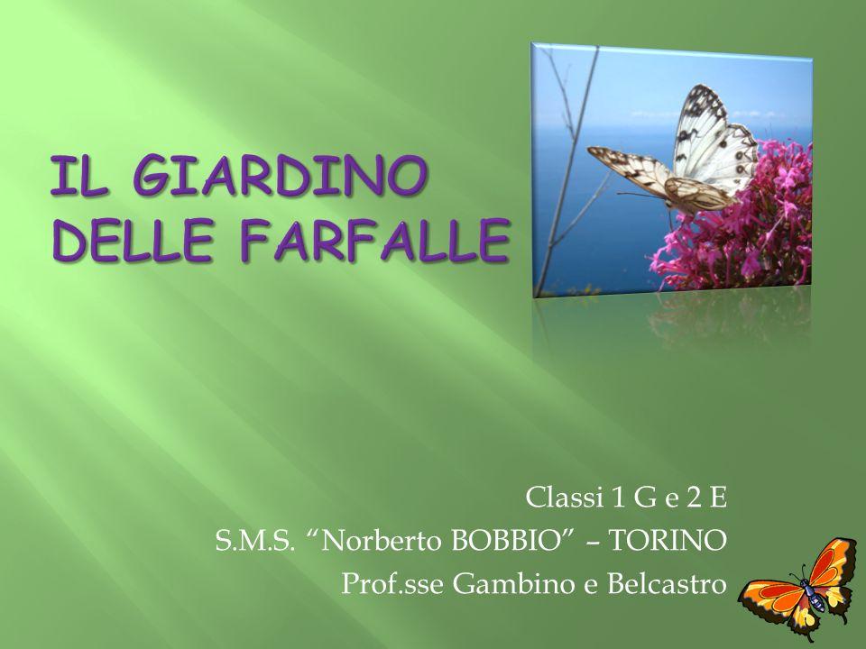 Classi 1 G e 2 E S.M.S. Norberto BOBBIO – TORINO Prof.sse Gambino e Belcastro
