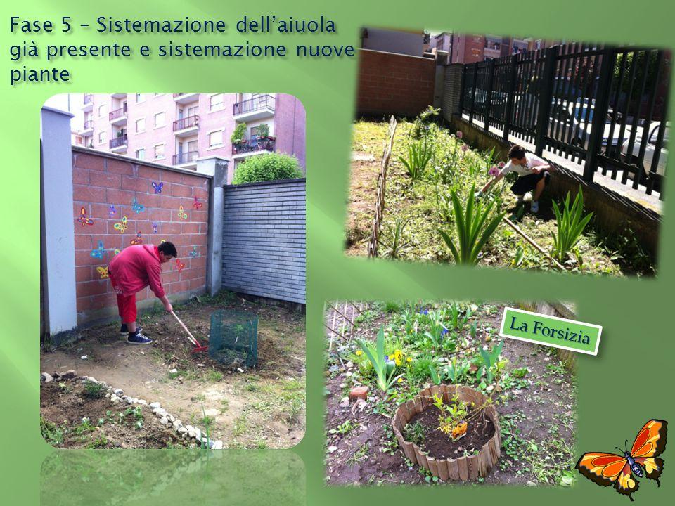 La Forsizia Fase 5 – Sistemazione dellaiuola già presente e sistemazione nuove piante