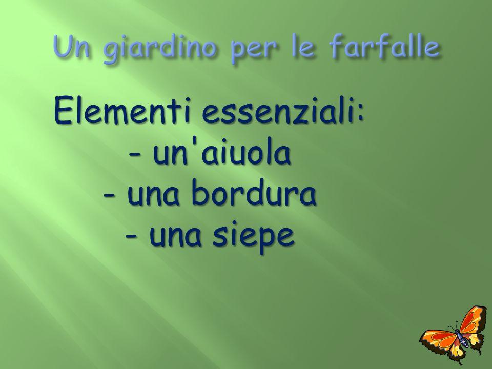 Elementi essenziali: - un aiuola - una bordura - una siepe