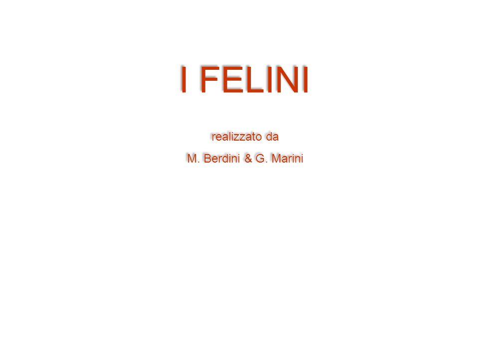 I FELINI realizzato da M. Berdini & G. Marini I FELINI realizzato da M. Berdini & G. Marini