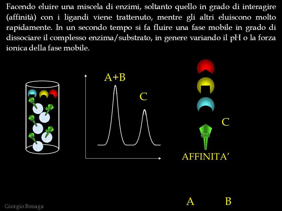 A+B C Giorgio Bonaga AFFINITA A B C Facendo eluire una miscela di enzimi, soltanto quello in grado di interagire (affinità) con i ligandi viene trattenuto, mentre gli altri eluiscono molto rapidamente.