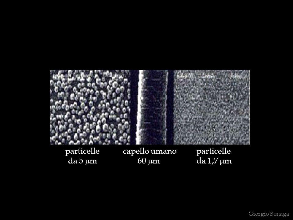 particelle capello umano particelle da 5 m 60 m da 1,7 m Giorgio Bonaga