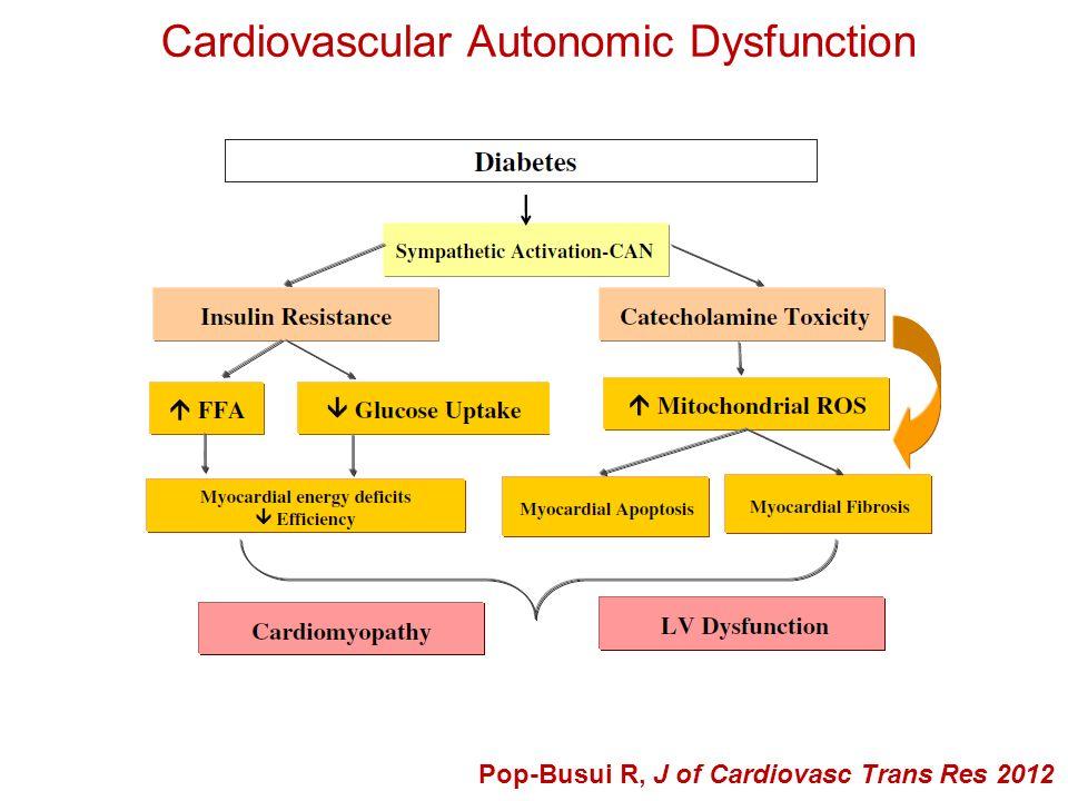 Cardiovascular Autonomic Dysfunction Pop-Busui R, J of Cardiovasc Trans Res 2012