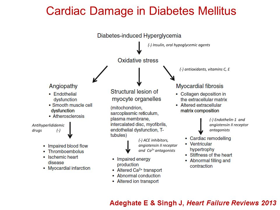 Cardiovascular Autonomic Dysfunction Pop-Busui R, J of Cardiovsc Trans Res 2012