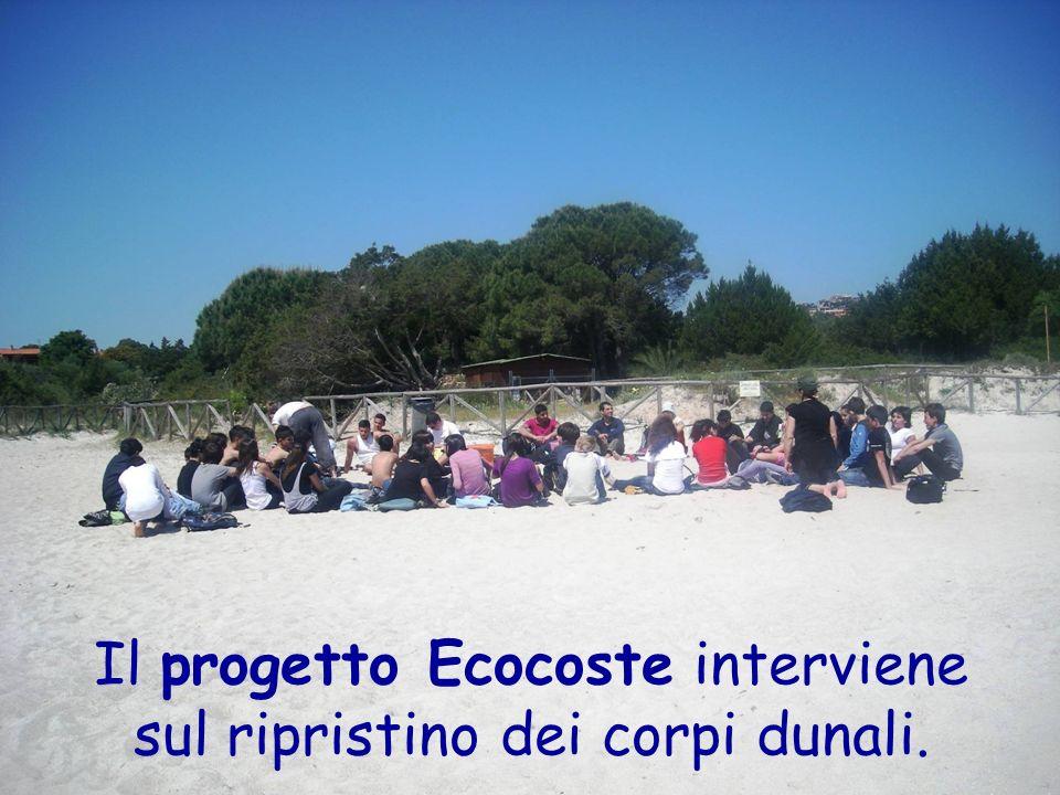 Il progetto Ecocoste interviene sul ripristino dei corpi dunali.