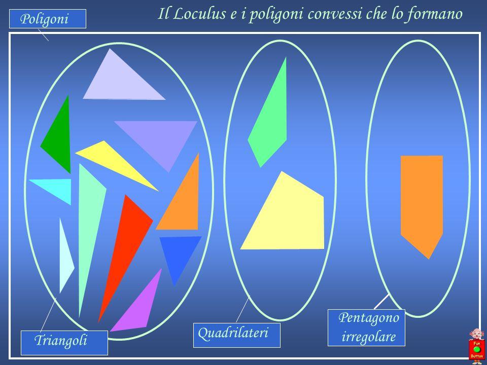 Il Loculus e i poligoni convessi che lo formano Poligoni Pentagono irregolare Quadrilateri Triangoli