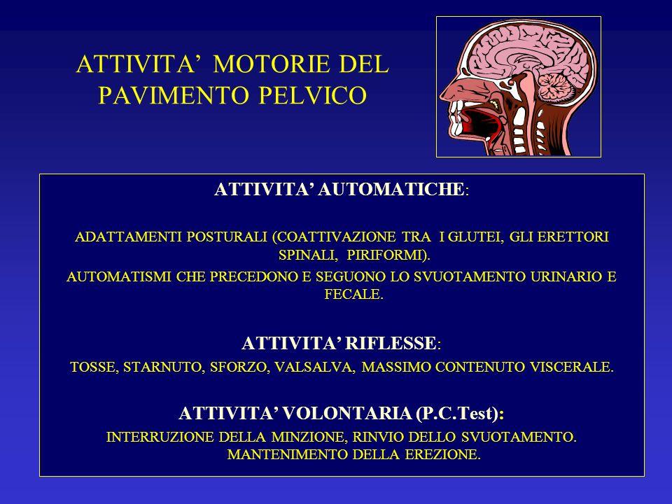 ATTIVITA MOTORIE DEL PAVIMENTO PELVICO ATTIVITA AUTOMATICHE : ADATTAMENTI POSTURALI (COATTIVAZIONE TRA I GLUTEI, GLI ERETTORI SPINALI, PIRIFORMI). AUT