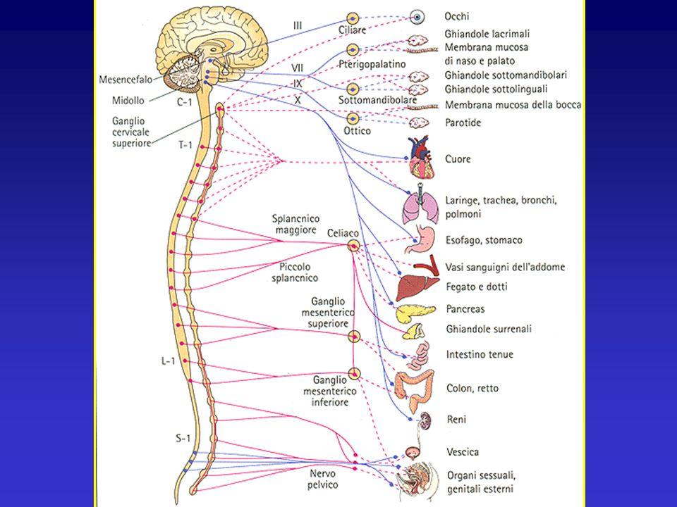 La Perineologia Interdipendenza tra sfera genitale ed apparato sfinteriale urinario ed intestinale ( J.