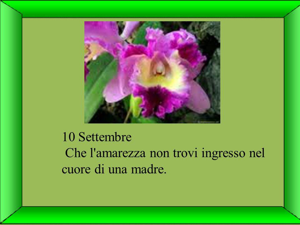 9. Settembre Lascia che la tua anima lavori in armonia con l'intelligenza universale, come il tuo respiro fa con l'aria.