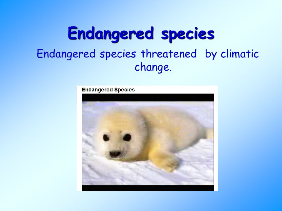 Endangered species Endangered species threatened by climatic change.