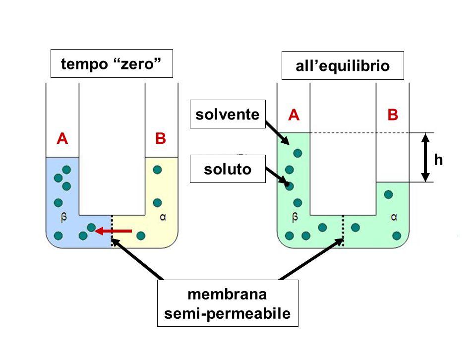 tempo zero allequilibrio membrana semi-permeabile soluto solvente h A A B B