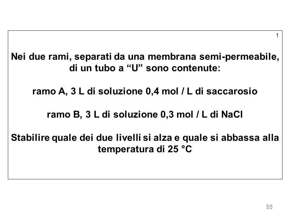 55 1 Nei due rami, separati da una membrana semi-permeabile, di un tubo a U sono contenute: ramo A, 3 L di soluzione 0,4 mol / L di saccarosio ramo B,