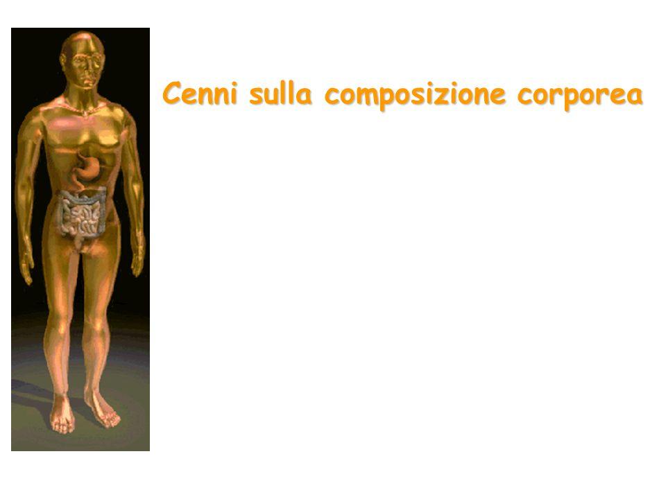 Cenni sulla composizione corporea