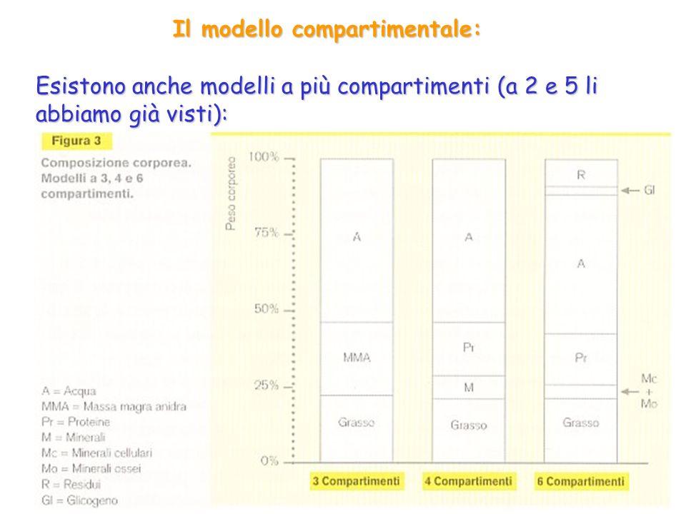 Il modello compartimentale: Esistono anche modelli a più compartimenti (a 2 e 5 li abbiamo già visti):
