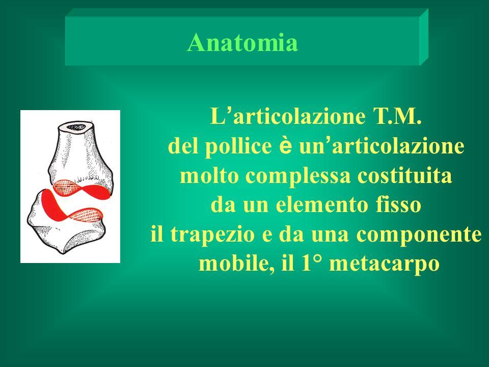 L articolazione T.M.
