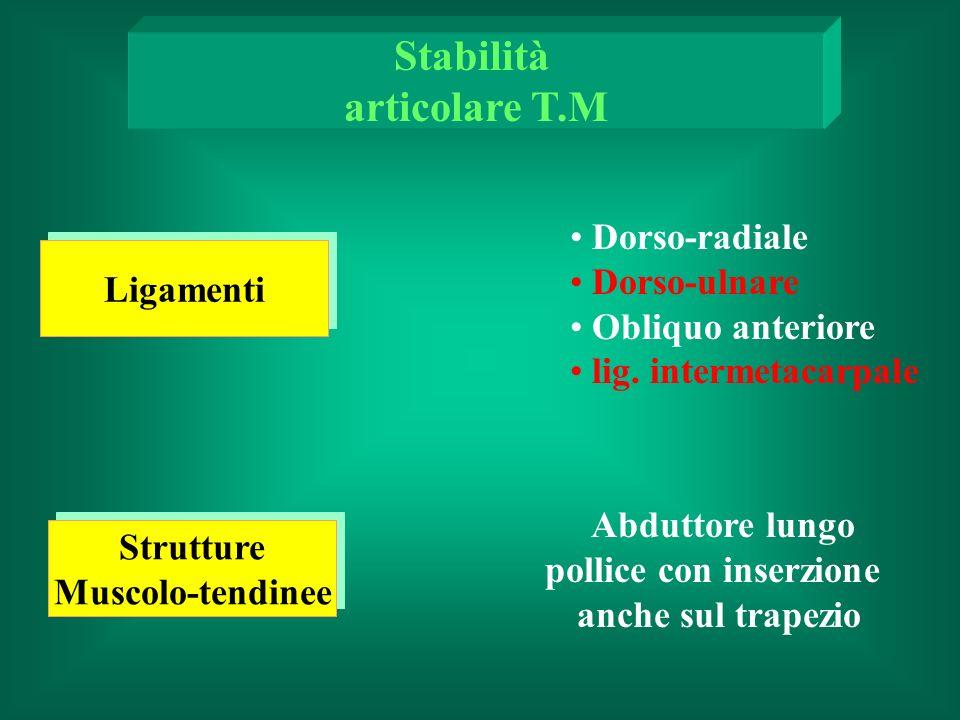 Dorso-radiale Dorso-ulnare Obliquo anteriore lig.