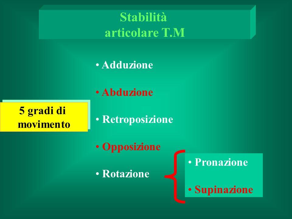 Adduzione Abduzione Retroposizione Opposizione Rotazione Pronazione Supinazione 5 gradi di movimento 5 gradi di movimento Stabilità articolare T.M