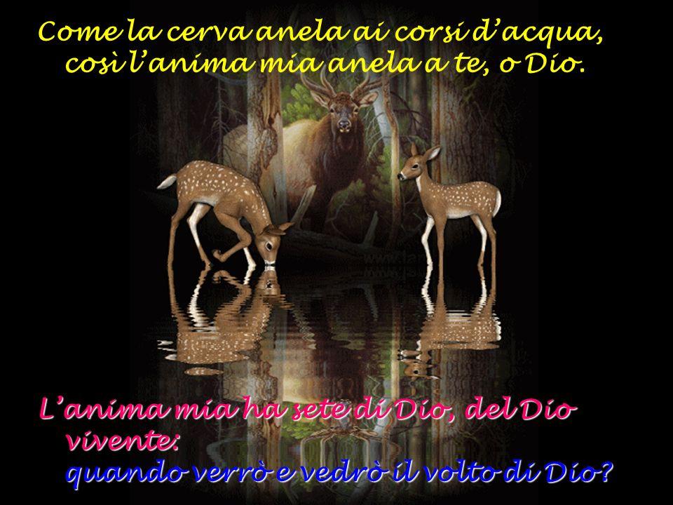 Come la cerva anela ai corsi dacqua, così lanima mia anela a te, o Dio. Lanima mia ha sete di Dio, del Dio vivente: q uando verrò e vedrò il volto di