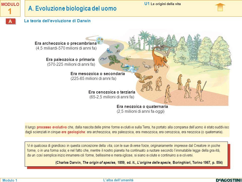 1 Modulo 1 MODULO Lalba dellumanità 5 milioni di anni fa 2,5 milioni di anni fa 40 mila anni fa 300 mila anni fa 1,8 milioni di anni fa Australopithecus Africa meridionale divergenza evolutiva tra scimmie antropomorfe e uomo Homo habilis Africa orientale e meridionale Scimmie antropomorfe Africa Homo sapiens arcaico Africa ed Eurasia Homo sapiens sapiens Africa, Eurasia, Americhe e Oceania 130 000 anni fa Uomo di Neanderthal Europa e Medio Oriente U1 Le origini della vita A1.1 A.